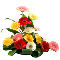 Eye-Catching Arrangement of 15 Mixed Gerberas