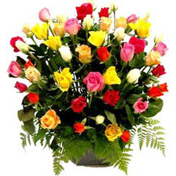 Impressive Selection of Mixed Roses in a Basket